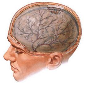 Циркуляторная энцефалопатия: симптомы, диагностика, лечение